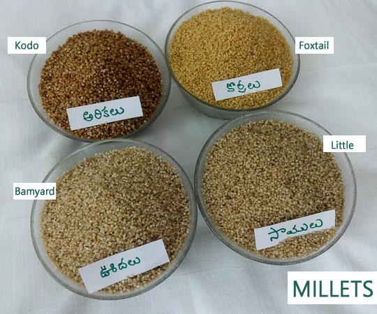 Buy Millets Online Hyderabad | Millets Online Order India